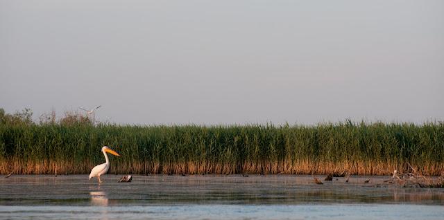 Intalnirea de neuitat cu pelicanii