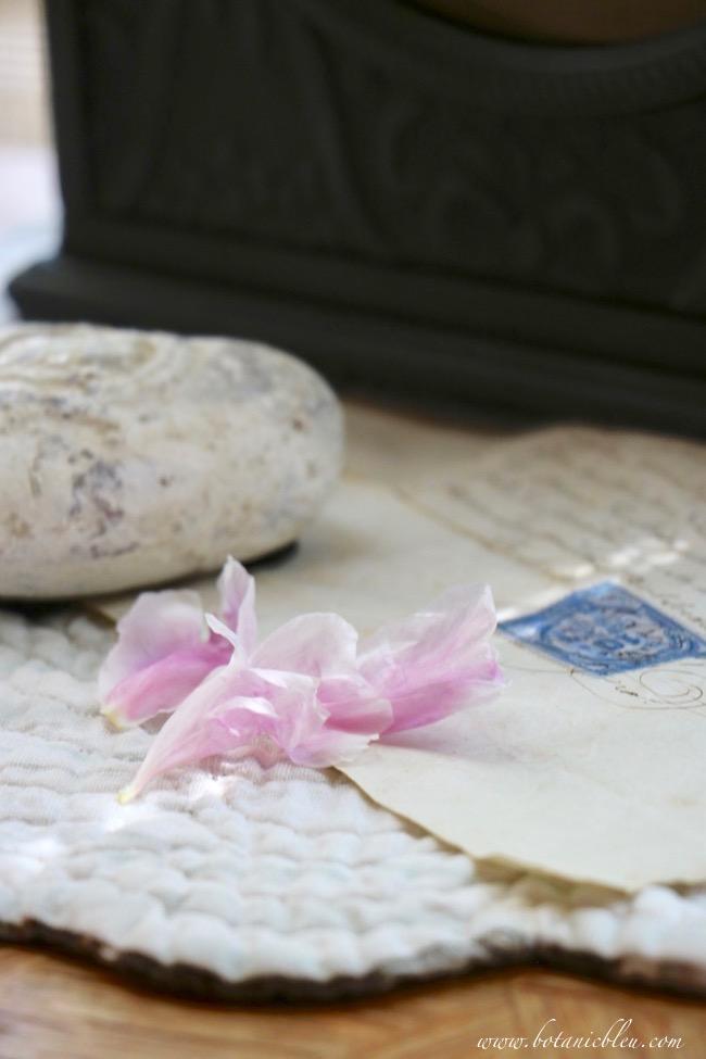 Dropped peony pink petals