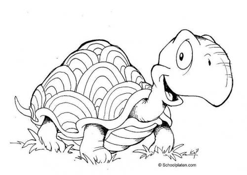 Dibujos De Jirafa Y Tortuga Para Colorear Animales Del Zoologico