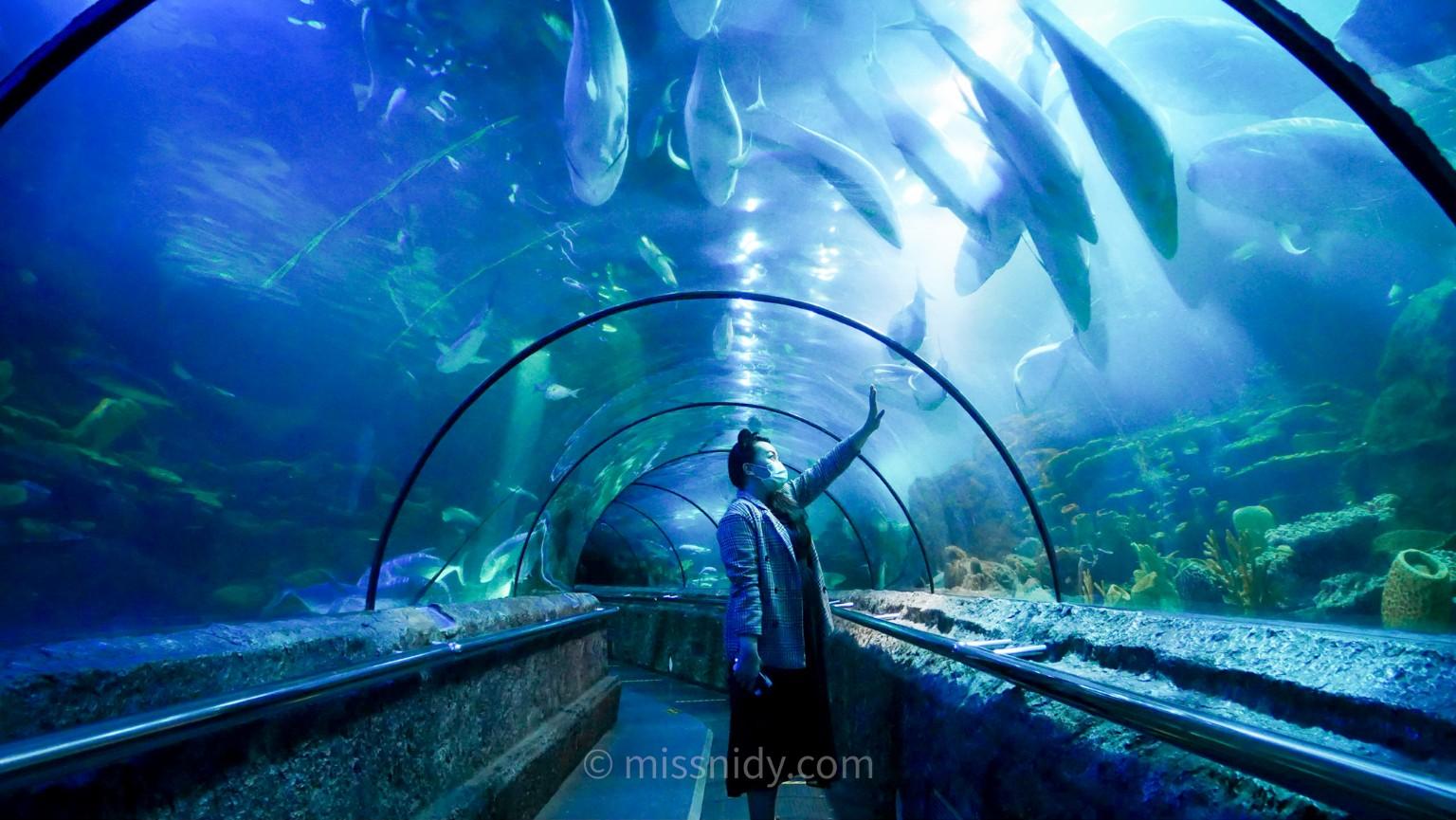lorong antasena di seaworld ancol