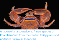 https://sciencythoughts.blogspot.com/2018/09/aliaporcellana-spongicola-new-species.html