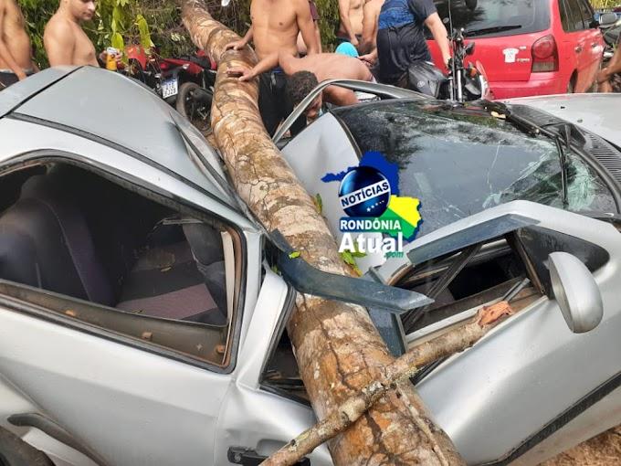 Durante chuva árvore cai sobre carro em balneário de Ji-Paraná