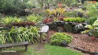 The Bromeliad section - Waimea Valley, Oahu, HI