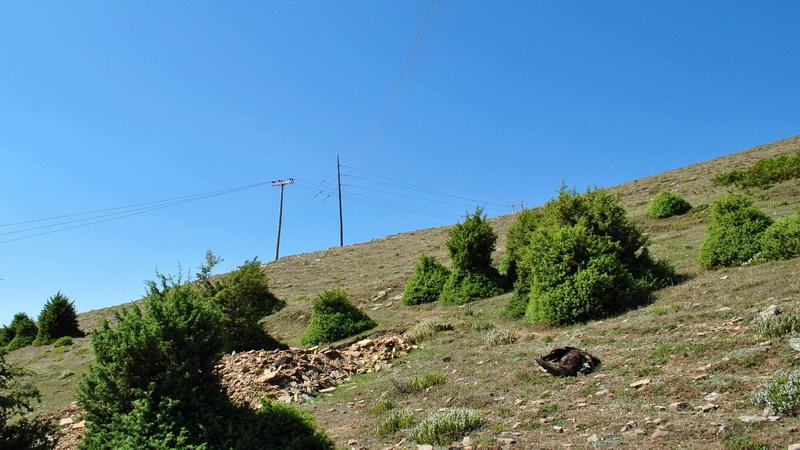 Νεκρός Μαυρόγυπας του δάσους Δαδιάς μετά από πρόσκρουση σε καλώδια του δικτύου ηλεκτρισμού
