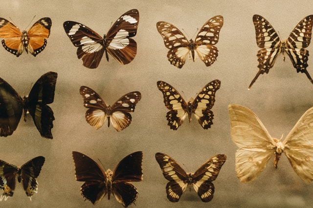 Philippines short story writers butterflies