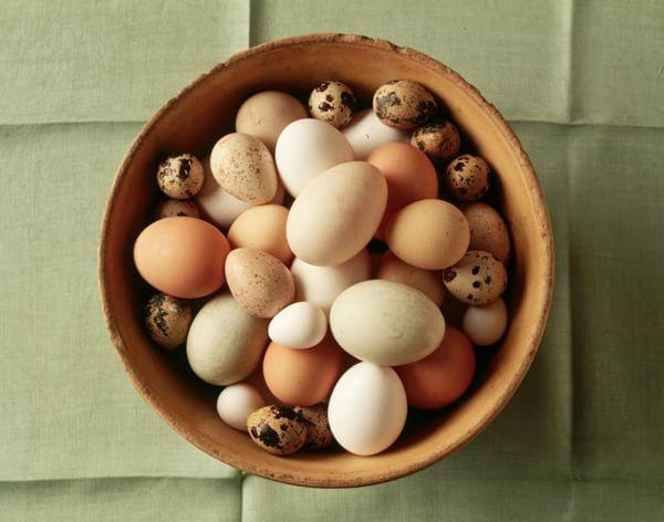 Perché le uova di gallina hanno colori diversi? #Sapevatelo | Mondo Tempo Reale