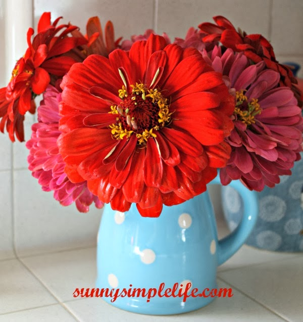 zinnias in vase, polka dot jug