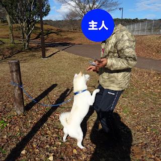 地元那須塩原市の那珂川河畔公園に、白柴チロを連れて行ってきました