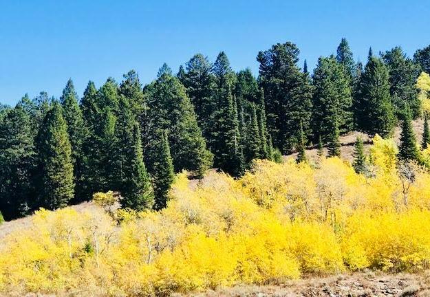 aspen-mountains-pine-hiking-camping