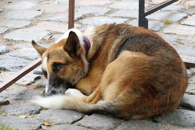 """Πρώτο σχόλιο για το νέο νομοσχέδιο για τα αδέσποτα ζώα και τα ζώα συντροφιάς από την Διαδικτυακή Ομάδα """"Αδέσποτα Greece"""""""