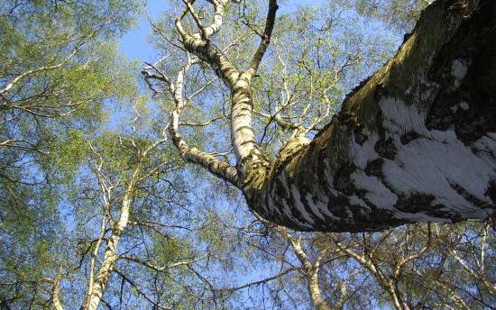 O sadzeniu drzew i modzie na nieśmiecenie - Czytaj więcej »