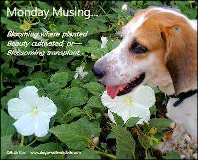 Inspirational Monday Musing