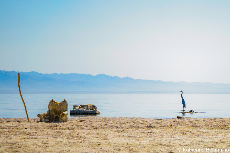 Great Blue Heron Salton Sea Beach Ghost Towns Photography