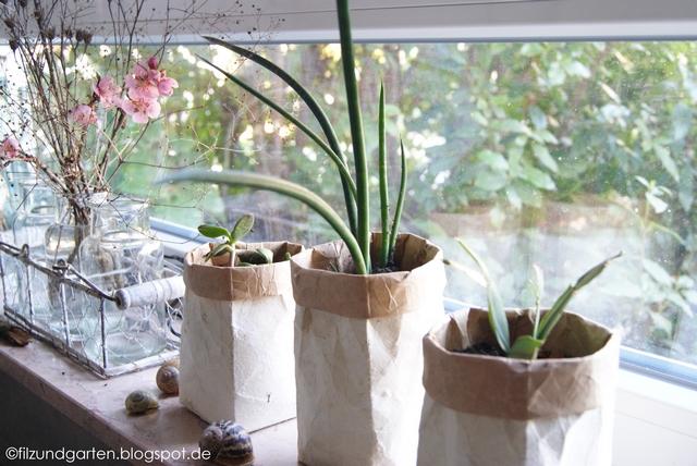 Fensterbankdeko mit Ablegern auf Zimmerpflanzen
