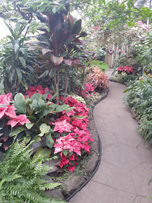 Allan Gardens Conservatory 2019 Winter Flower Show eleven by garden muses--not another Toronto gardening blog