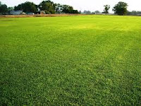 Memanfaatkan Rumput Lapangan Atau Rumput Sawah Untuk Pakan Kambing Dan Domba
