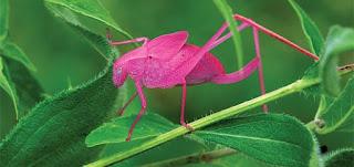 pesquisadores do Audubon Nature Institute, localizado em Nova Orleans, nos Estados Unidos, descobriram que a coloração está exclusivamente ligada à evolução da espécie.