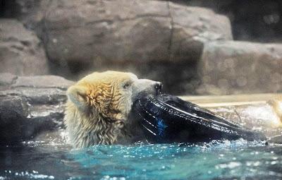 eine otter rätsel
