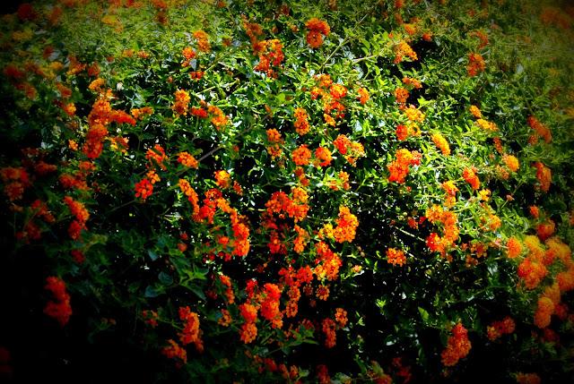 orange lantana: LadyD Books