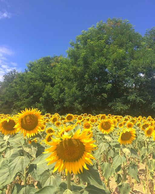 A big 'ole Summer Update