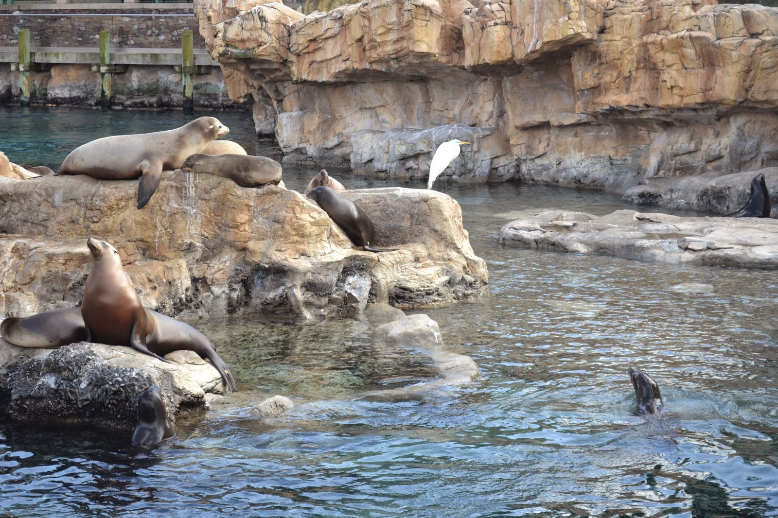 Sea Lions at SeaWorld Orlando