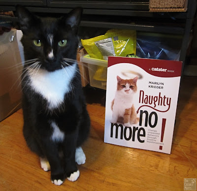 Mr. Kitty and the book Naughty no More by Marilyn Krieger