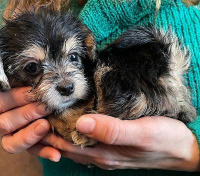 puppy blog