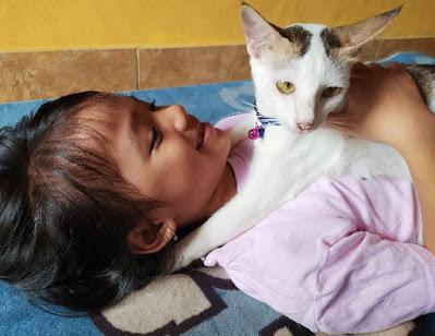 Steril Kucing Betina