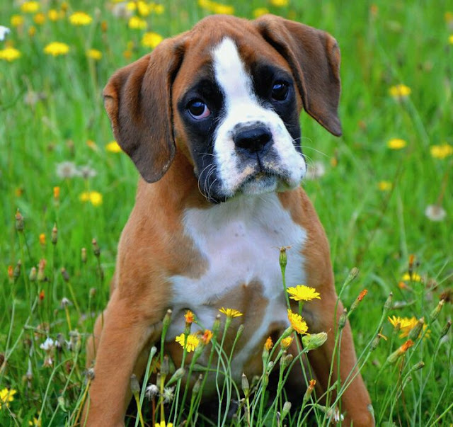 Top 5 Best Dog Breeds for Children