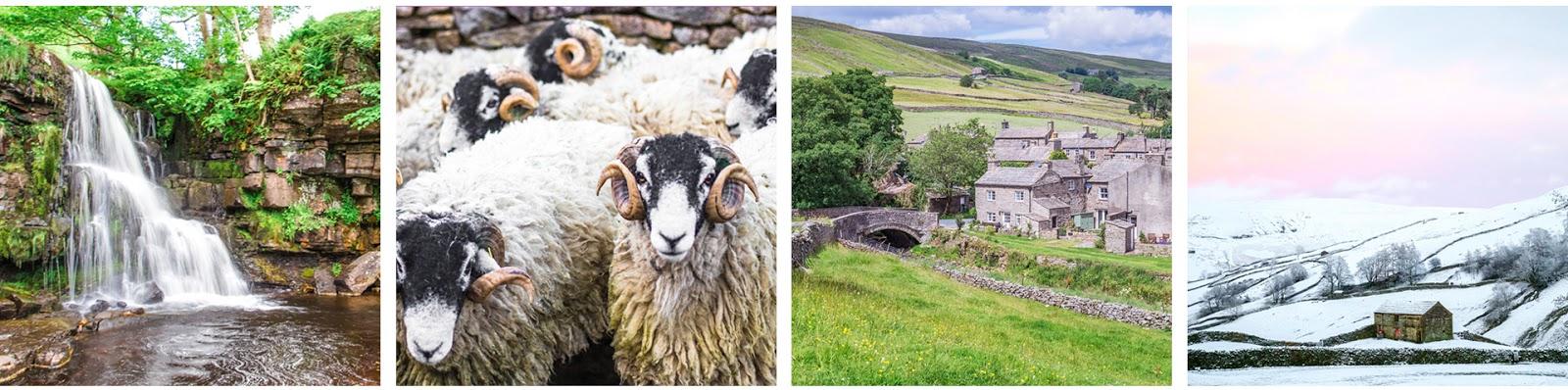 Aygill Farm holiday cottage Swaledale Yorkshire Dales sheep farm
