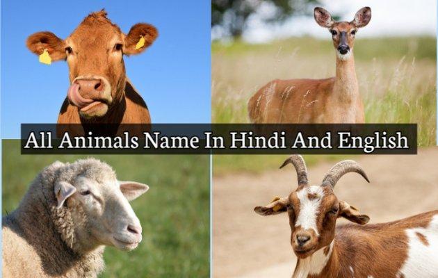 100+ Animals Name In Hindi And English - सभी जानवरों के नाम हिंदी में