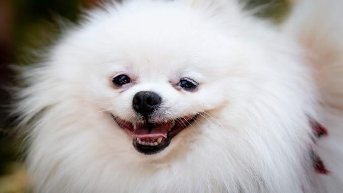 Papel de Parede Cachorrinho Fofo