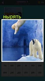 два медведя на севере, один из которых ныряет со льдины в воду