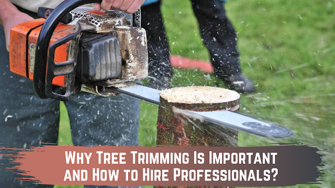 Why Tree Trimming Is Important and How to Hire Professionals?