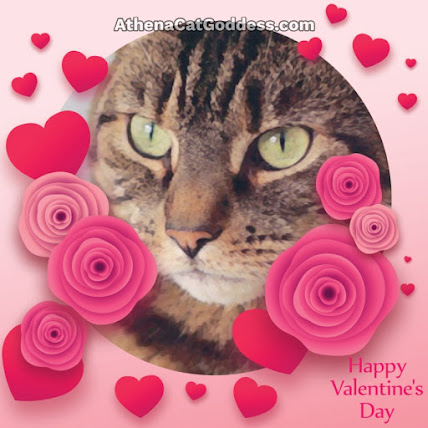 Tabby cat Valentine's Card