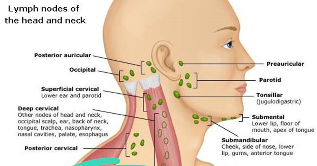 Clavicle Lymph Nodes Diagram Auto Wiring Diagram Today