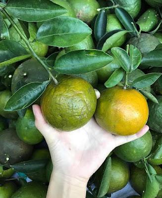 cung cấp trái cây miền tây giá sỉ