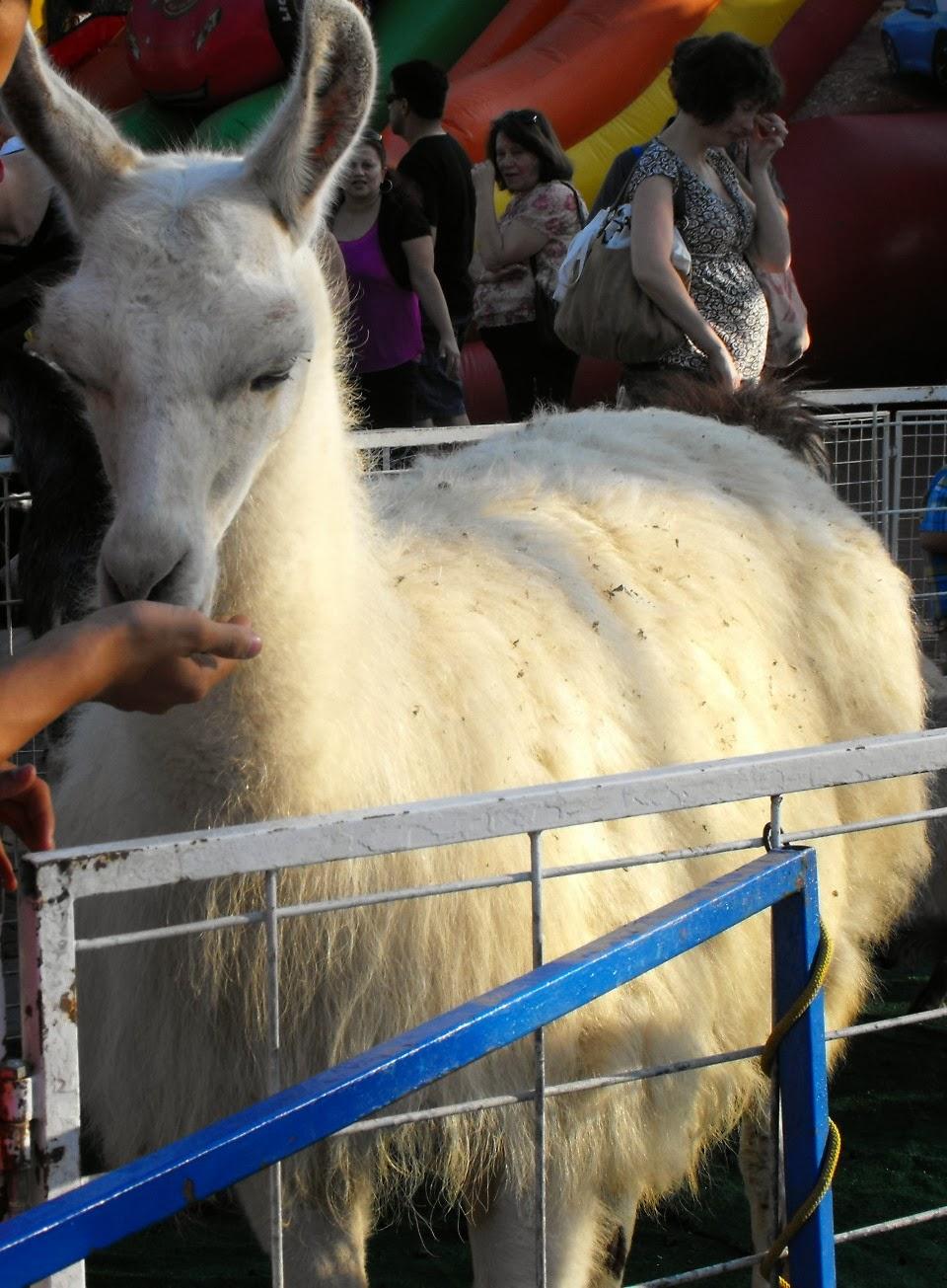 Becky's Pony Express - Pony Rides, Petting Zoo and Pony Parties