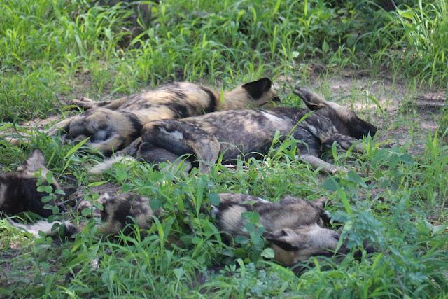 Blog Apaixonados por Viagens - Safári - África do Sul - Kruger Park