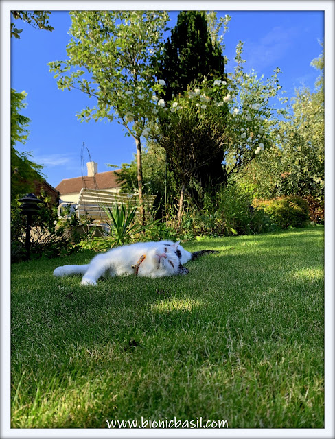 Sunning with Smooch ©BionicBasil® The Pet Parade 362