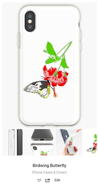 Birdwing butterfly eats nectar of Hibiscus flower
