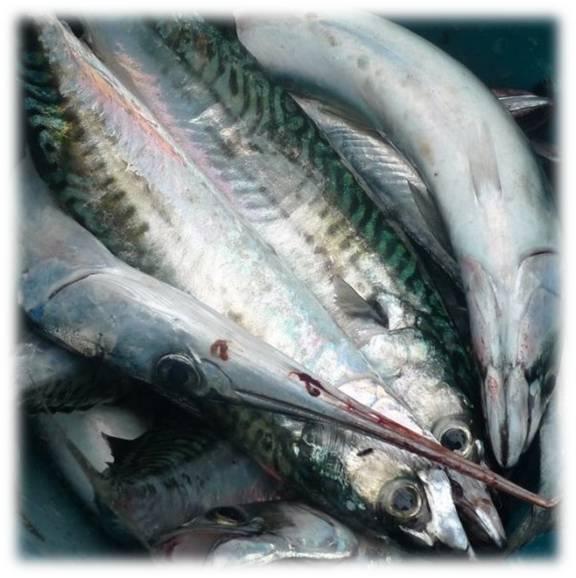 La d sirade iv cuisiner le poisson for Poisson les plus cuisiner