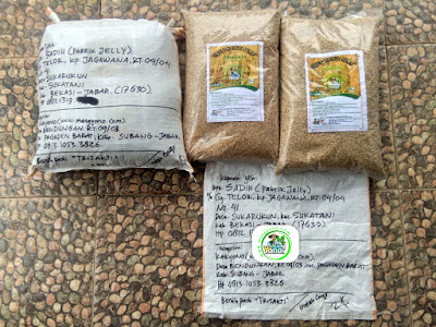 Benih pesana    SADIH Bekasi, Jabar.   (Sebelum Packing)