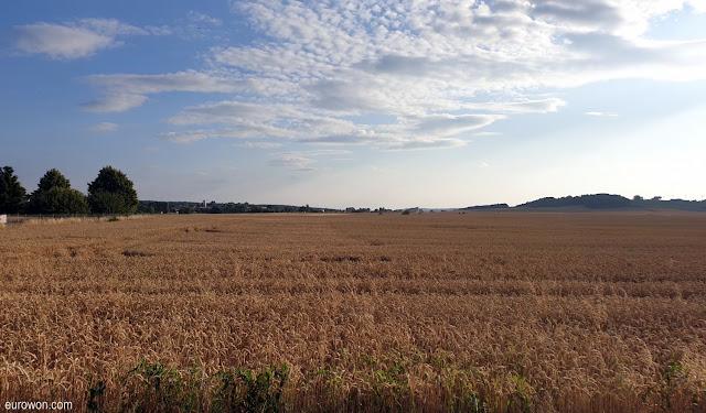 Campo de cereal en Alemania