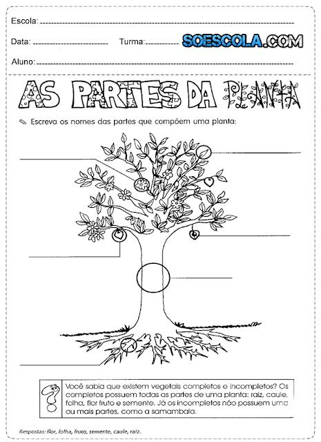 Atividade de Ciências 3° ano sobre Plantas