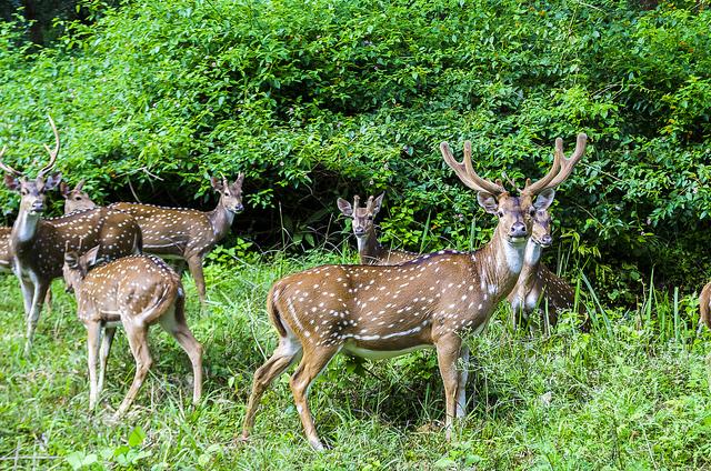Deer Park in Ooty