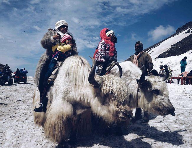 Yak ride in Manali