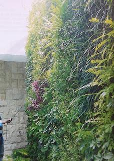 Taman Vertikal | Vertical Garden | jasataman.co.id XVI