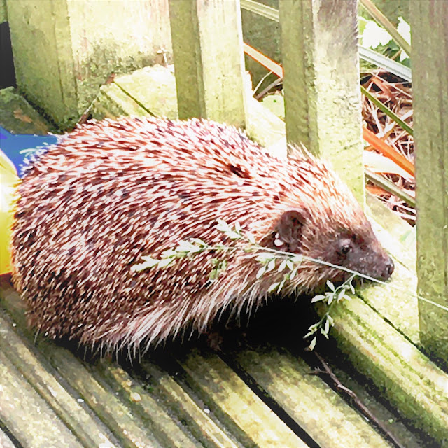 hedgehogs uk garden decking