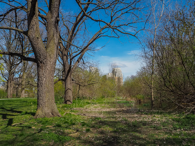 Downtown Park in London Ontario Viliam Glazduri